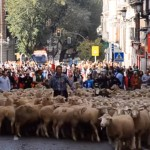 Epic 2,000-Sheep Parade in Madrid, Spain