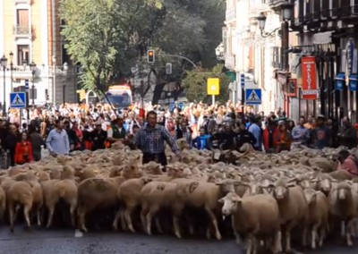Sheep parade in Madrid, Spain