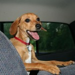 Must-Know Tips for Traveling With Your Pets (Plane or Car)