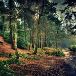 """Take an Inspiring Trip Down the """"Hobbit Trail"""" in New Zealand"""