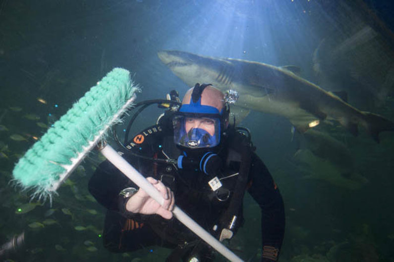 Shark tank cleaner
